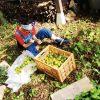 廃材でセルフビルド「柿渋で防腐剤づくり」