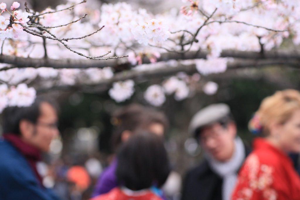 kimonogumi-event-sakura